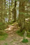 Grizdale Forest by Forestina-Fotos