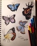 Butterfly Studies  by AyshaArts