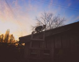 Cat on the Purple roof, Pt.2 by LuciaLacrimabundus