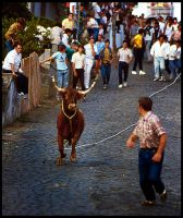 Bullfight in Azores by psimau