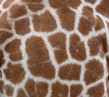 Stock texture 6 : giraffe by Vertasual