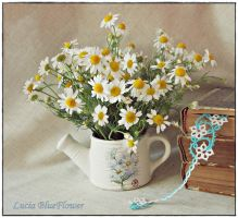 small flowers in watering can 1 by LuciaBlueFlower