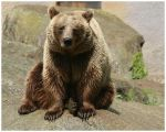 Brown Bear by xuvi