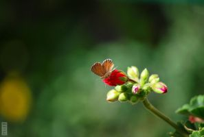 Bud and Butterfly by AlwaysRainCheck