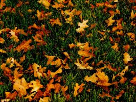Fall by The-Phan