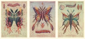 Lepidoptera obscura species I by V-L-A-D-I-M-I-R