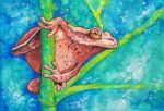 Spring Peeper by Aikya