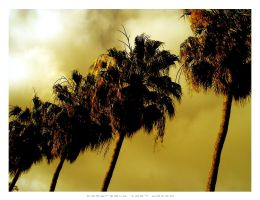 Golden Palm Trees by Docca