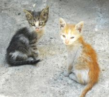 Kittens by TalusPhotography