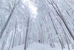 Lost in the white Forest by Swen11