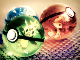 6th generation starter in Pokeballs by Jonathanjo