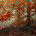 -Ancient calling of autumn- by Janek-Sedlar