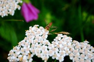 Insect on flower by MichelleB-Stock