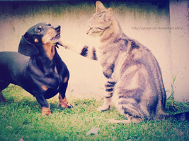 My dog and my cat by Peace-Cat