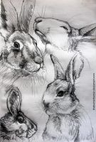 Rabbit Sketches by TheKunterbunter