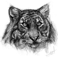 Tiger Speed Drawing by PixelRave