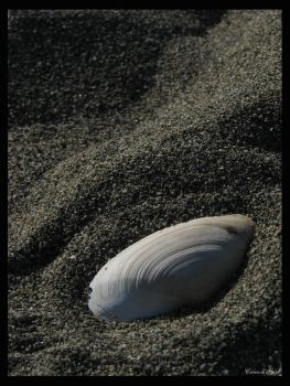 Secluded Shell by canuckgurl22