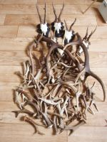 antlers by woodcarve