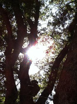 Sunlight in the Branches by ethan-gomez13