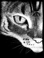 Scratch Board - Cat by junkyard-angels