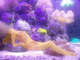 Aquarium by Flore