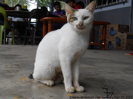 Country cat 20141130 _ 2 by K4nK4n