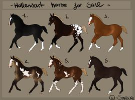Hollendart foal for sale by Starblas