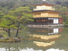 Kinkakuji Temple and a tree. by blindbutblink