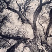 Black and White Tree by shelbyrenee