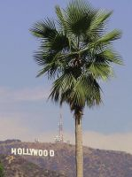 Hollywood California by Lahe