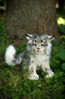 SOLD! Handmade Poseable toy Snow leopard cub by MalinaToys