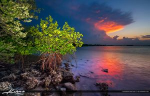 Mangrove-at-Lake-Worth-Lagoon-with-Colorful-Clouds by CaptainKimo