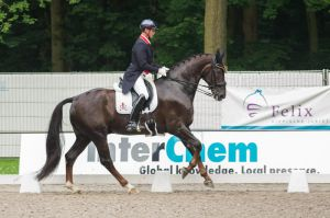 Dressage Stock - XXX by Summerly