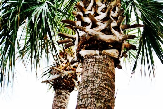 The Palms 1 by WadeCreativeSuite