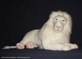 Hansa - Rare Large adult White Lion plush (Kimba) by dapumakat