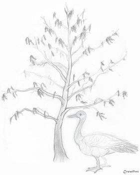 tree and goose sketch by Crowflux