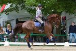 Chestnut WB Extended Canter Dressage Training by LuDa-Stock