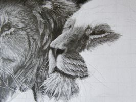 close up of lion wip by Dom579