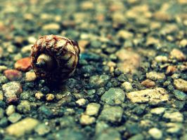 Acorn by Photography3136