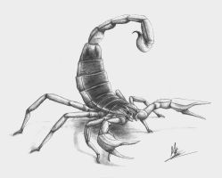 Scorpion by Giganotosaur