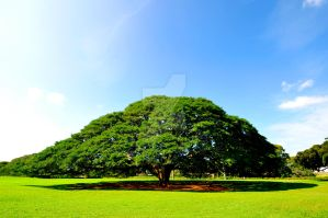 Hitachi No Ki (Hitachi Tree) by TimFranklin