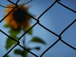 Caged by Silthria
