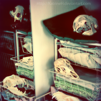 Skulls in my closet by KatrineH