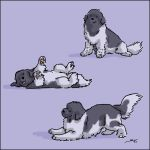 Puppies by newfka