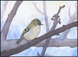 Goldcrest by gifdot