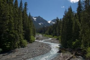 River Winding Through Trees 1 by happeningstock