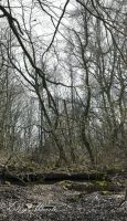 A Forest - VIII by 666gothika666