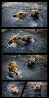 Playful bears by villasukka