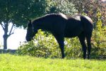 Black Horse Stock 6 by Ghost-Rebel-Stock
