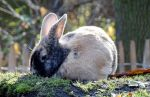 Little rabbit by AnNacht